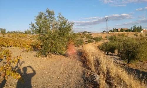 imagen 4 de Venta de parcela agrícola en Fuente Del Maestre (Badajoz)