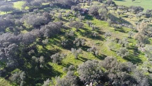 imagen 1 de Venta de olivar en Valencia Del Ventoso (Badajoz)