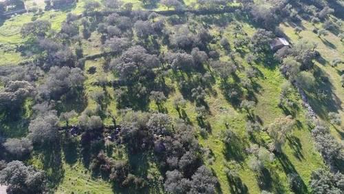 imagen 2 de Venta de olivar en Valencia Del Ventoso (Badajoz)