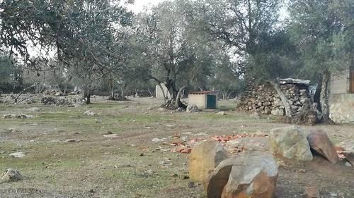 imagen 4 de Venta de una preciosa finca en Fregenal De La Sierra (Badajoz)