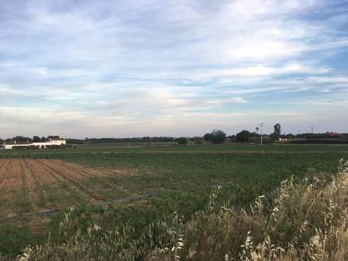 imagen 7 de Venta de terreno agrícola en Badajoz