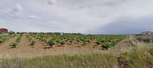 imagen 1 de Venta de Parcela agrícola en Fuente Del Maestre (Badajoz)