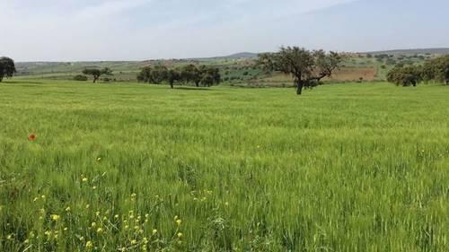imagen 2 de Venta de finca agrícola y ganadera en Campillo De Llerena (Badajoz)