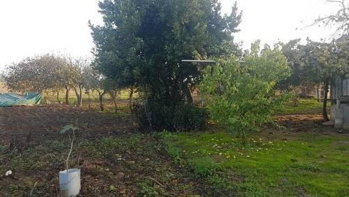 imagen 3 de Venta de finca rústica en Badajoz