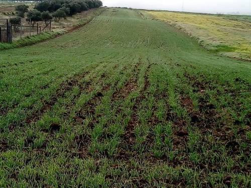imagen 1 de Venta de terreno en Esparragalejo (Badajoz)