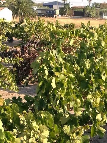 imagen 2 de Venta de viñedo en Villanueva De La Serena (Badajoz)