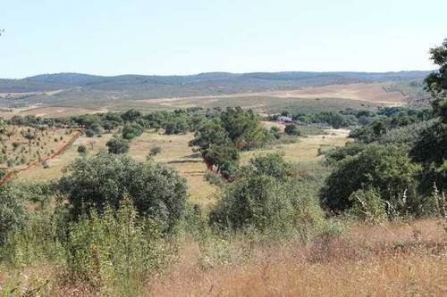 imagen 4 de Venta de finca agrícola en La Codosera (Badajoz)