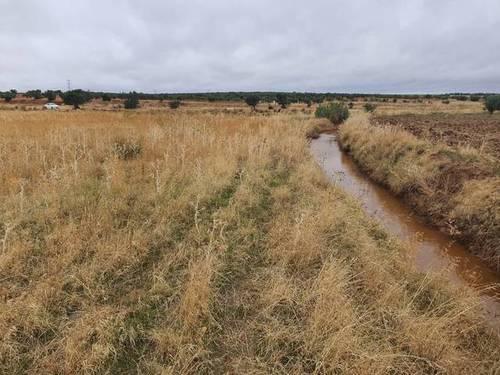 imagen 2 de Venta de tierra de labor en Almendralejo (Bandajoz)