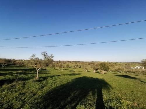 imagen 1 de Venta de terreno rústico en Fregenal De La Sierra (Badajoz)