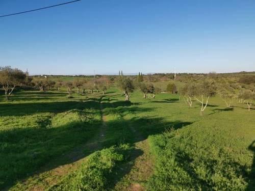 imagen 3 de Venta de terreno rústico en Fregenal De La Sierra (Badajoz)