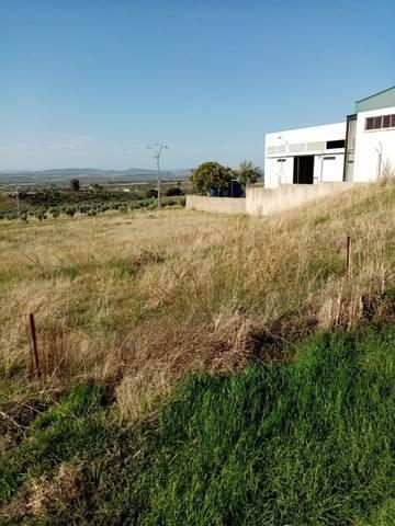 imagen 4 de Venta de parcela rústica en Castuera (Badajoz)