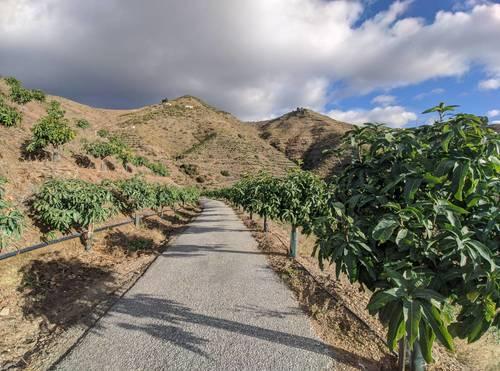 imagen 7 de Finca de mangos en Almuñécar (Finca de Banco)
