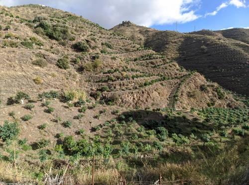 imagen 4 de Finca de mangos en Almuñécar (Finca de Banco)