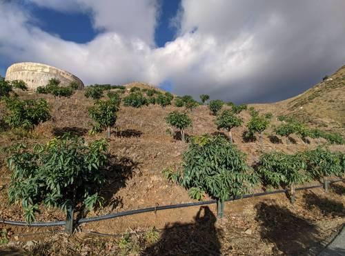 imagen 6 de Finca de mangos en Almuñécar (Finca de Banco)