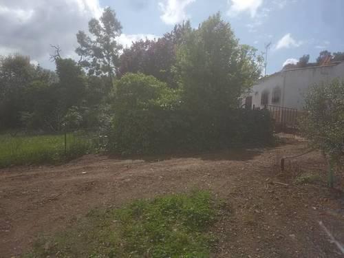 imagen 1 de Venta de olivar y casa rural en Salvaleón (Badajoz)