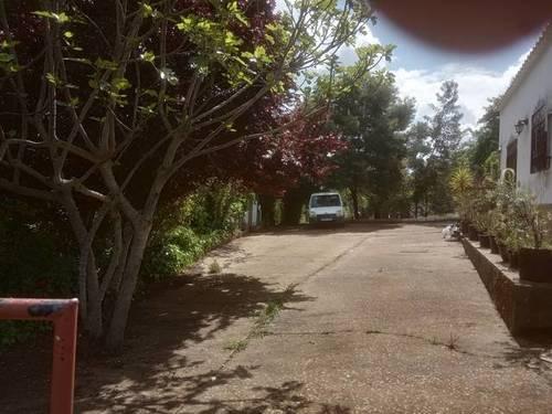 imagen 3 de Venta de olivar y casa rural en Salvaleón (Badajoz)
