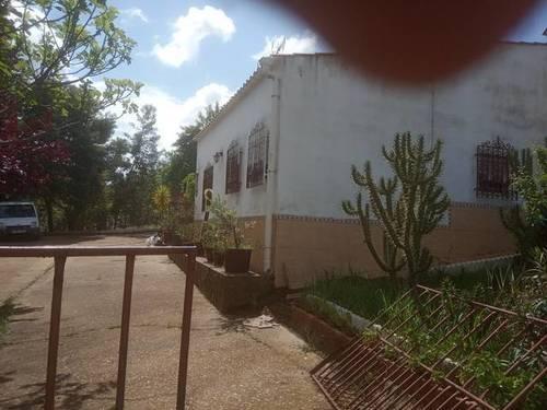 imagen 4 de Venta de olivar y casa rural en Salvaleón (Badajoz)