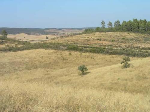 imagen 3 de Venta de fincas en La Codosera (Badajoz)