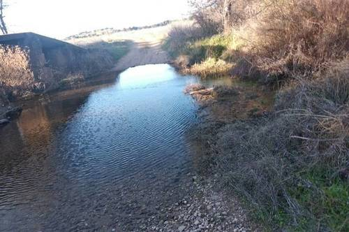 imagen 2 de Venta de olivar en La Nava de Santiago (Badajoz)