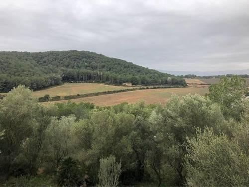 imagen 1 de Venta de olivar y bosque en Felanich (Mallorca)