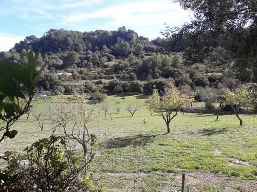 imagen 1 de Venta de finca con caseta en Mancor del Valle (Mallorca)