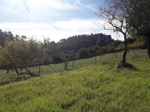 imagen 2 de Venta de finca con caseta en Mancor del Valle (Mallorca)