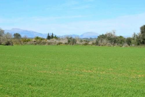 imagen 1 de Venta de finca en Montuiri (Mallorca)
