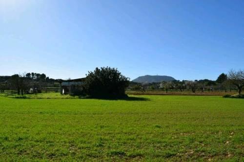 imagen 2 de Venta de finca en Montuiri (Mallorca)