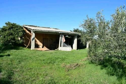 imagen 3 de Venta de finca en Montuiri (Mallorca)
