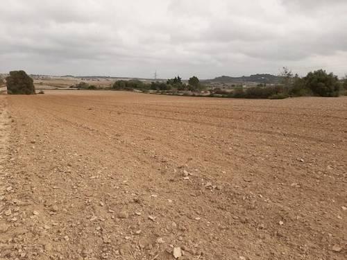 imagen 1 de Venta de finca en Santa Margalida/Margalita (Mallorca)
