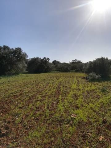 imagen 2 de Venta magnífica finca en Campos (Mallorca)