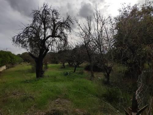 imagen 1 de Venta de parcela en Búger (Mallorca)