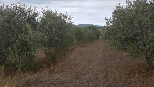 imagen 1 de Venta de bonita finca olivar y cultivo en Sant Martí Sarroca (Barcelona)