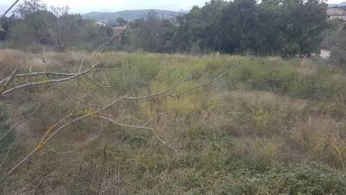 imagen 3 de Venta de bonita finca olivar y cultivo en Sant Martí Sarroca (Barcelona)
