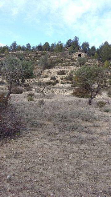 imagen 1 de Venta de olivar con vistas a Monserrat en Manresa (Barcelona)