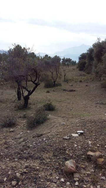 imagen 2 de Venta de olivar con vistas a Monserrat en Manresa (Barcelona)