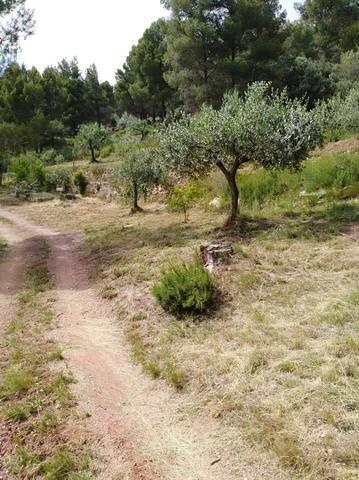imagen 2 de Venta de estupenda finca en Esparreguera/Esparraguera (Barcelona)