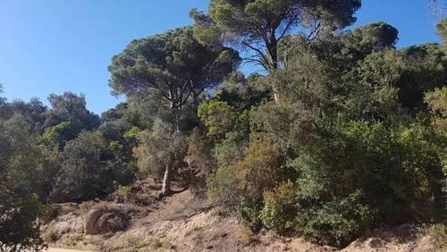 imagen 1 de Venta de finca en Sant Cebrià de Vallalta/ San Cipriano de Vallalta (Barcelona)