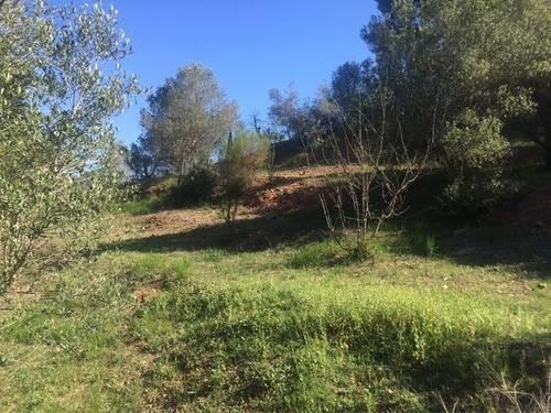 imagen 1 de Venta de olivar con casa y pozo en Castellbisbal (Barcelona)