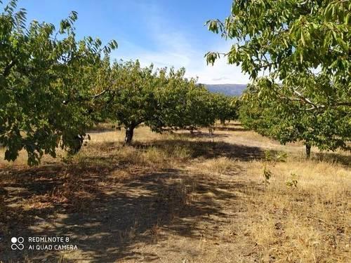 imagen 3 de Venta de finca de cerezos en Torremenga (Cáceres)