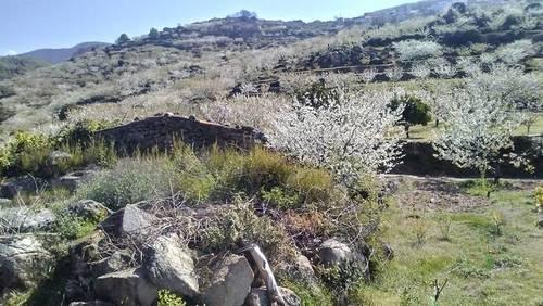 imagen 1 de Venta finca de cerezos en Valdastillas (Cáceres)