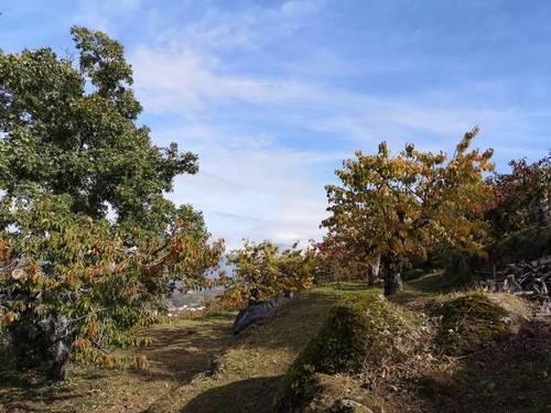 imagen 3 de Venta de linda finca en Cabrero (Cáceres)