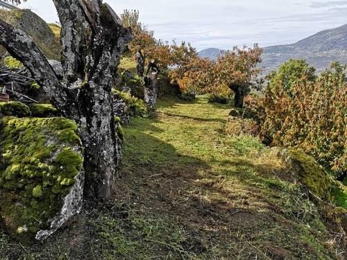 imagen 1 de Venta de linda finca en Cabrero (Cáceres)