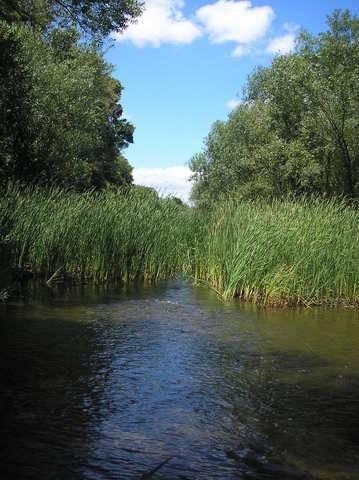 imagen 1 de Venta de huerta junto al río en Moraleja (Cáceres)