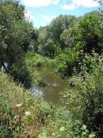 imagen 2 de Venta de huerta junto al río en Moraleja (Cáceres)