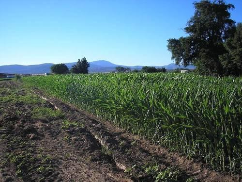 imagen 4 de Venta de huerta junto al río en Moraleja (Cáceres)
