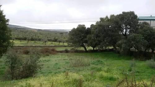 imagen 1 de Venta de parcela en Mohedas de Granadilla (Cáceres)