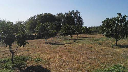 imagen 1 de Venta de  finca de frutales Arroyomolinos de la Vera (Cáceres)