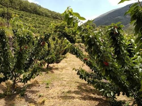 imagen 1 de Venta de finca en Los tres Cerros en Jerte (Cáceres)