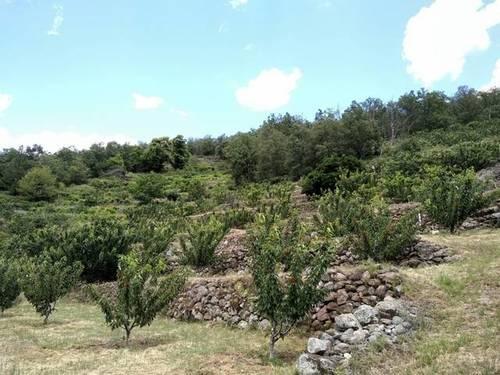 imagen 2 de Venta de finca en Los tres Cerros en Jerte (Cáceres)